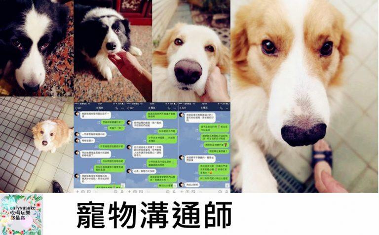 寵物溝通師